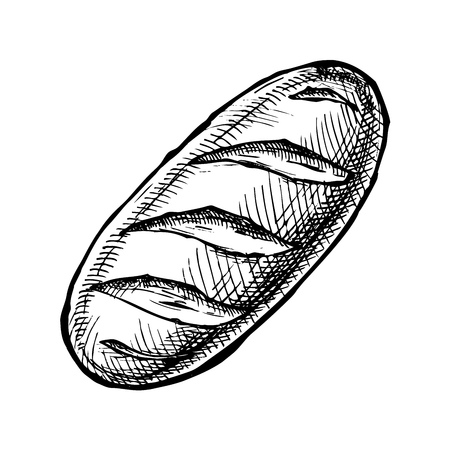 Hand drawn Illustration of long loaf in vintage engraved style. isolated on white. Top view