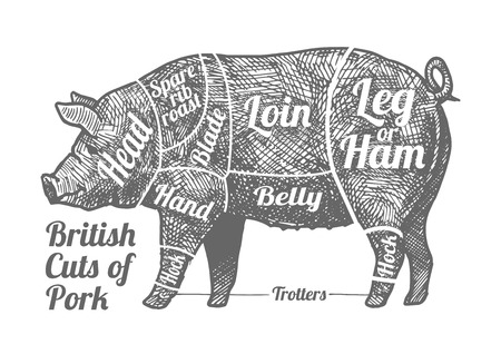 British cuts of pork. Vector hand drawn illustration in vintage engraved style. Isolated on white background.