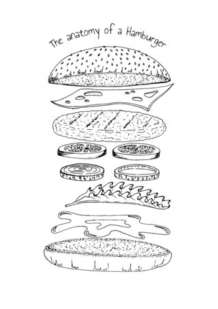 The anatomy of a Hamburger. Vector hand drawn illustration in vintage engraved style. Isolated on white.