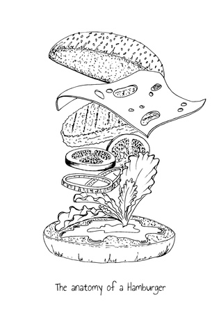 Fast food concept. The anatomy of a Hamburger. Vector hand drawn illustration in vintage engraved style. Isolated on white. Ilustracja