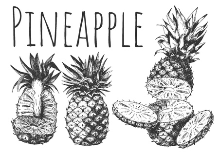 Vector hand drawn set of tropical fruits. Juicy ripe pineapple cut into rings and halved, whole pine. Isolated on white background. Ilustracja