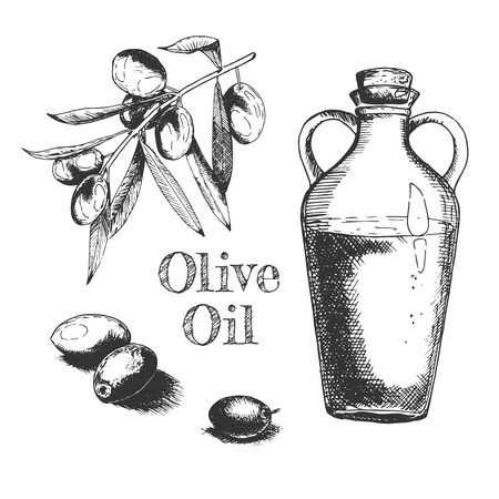Vector hand drawn illustration of olives fruit, tree branch with leaves, transparent glass oil bottle and concept lettering in vintage engraved style. Isolated on white background.