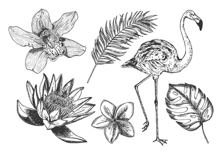Vector hand drawn illustration of exotic set with monstera, fig tree, orchid, lotus, frangipani in vintage engraved style. Isolated on white background. Vektoros illusztráció