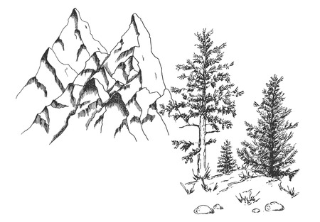Vector hand drawn illustration of mountains and coniferous trees, pines, firs wild natural landscape in vintage engraved style. Isolated on white background.