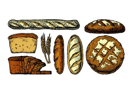 Vector hand drawn illustration of different breads: wheat germ, long loaf, pan loaf (sliced), baguette and boule. isolated on white.