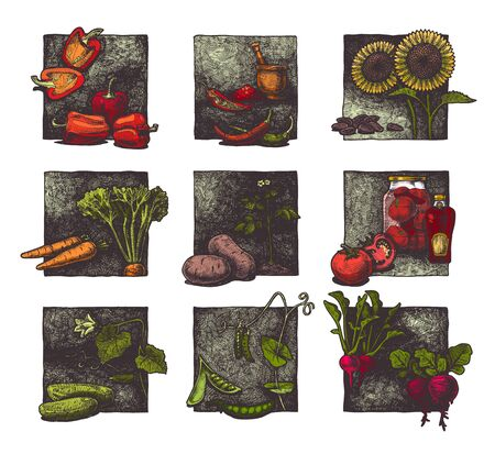 Vector ink hand drawn set of vegetables. illustration of paprika, pepper, sunflower, carrot, potato, tomato, cucumber, pea and radish.
