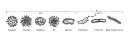 Vector hand drawn set of different virus and bacteria: Coronavirus, Influenza, Variola, HIV, Rabies, Vibrio Ð¡holerae, Yersinia Pestis, Mycobacterium tuberculosis. illustration in vintage engraved style. Isolated on white background.