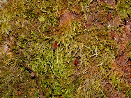 Tree bark covered with green moss and bug 免版税图像