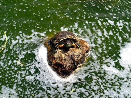 water pool in the Park with a turtle