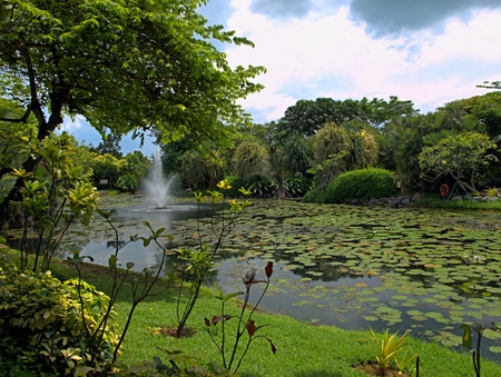Singapore Park with trees and exotic flowers Stock Photo