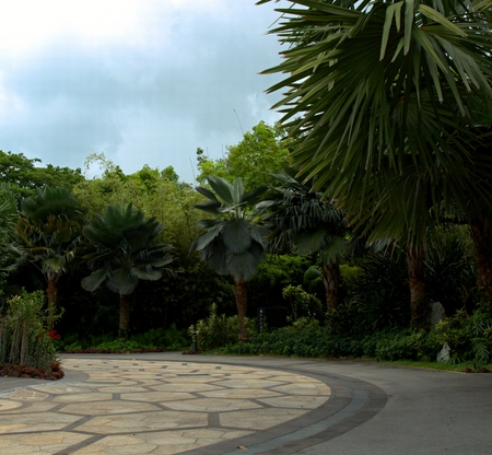 Singapore Park with trees and exotic flowers Reklamní fotografie