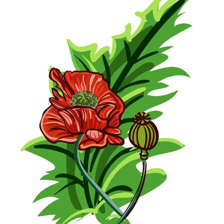 clip-art with red poppy Vector