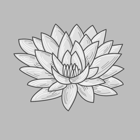 Hand drawn lotus Vector