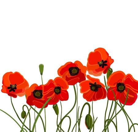 poppy field: flores Vectores