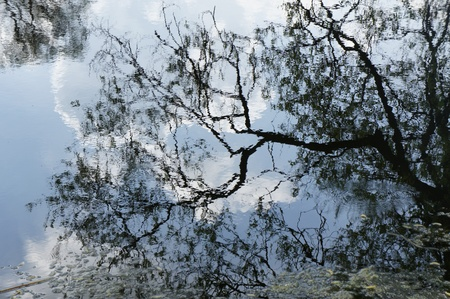 Black branches reflection in the water photo