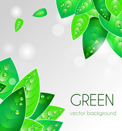 Abstract light vector  background with green leafs Stock Vector - 9765281