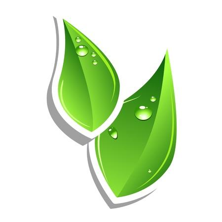Green leafs. Vector web element. Sticker