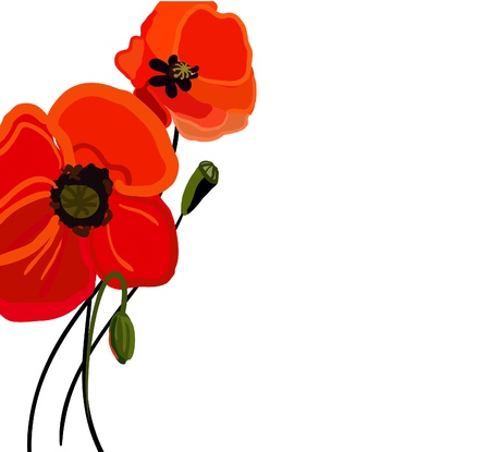 poppy flower: Realistic vector illustration with red poppy