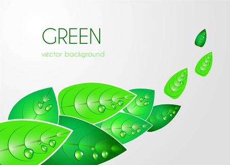 Abstract light vector  background with green leafs Stock Vector - 10062761