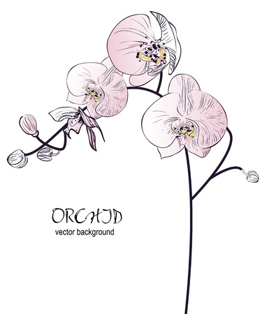 orange blossom: Orchid