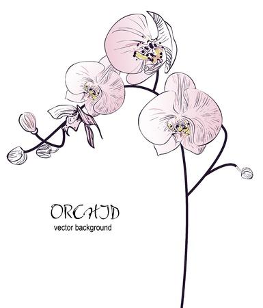 azahar: Orqu�dea