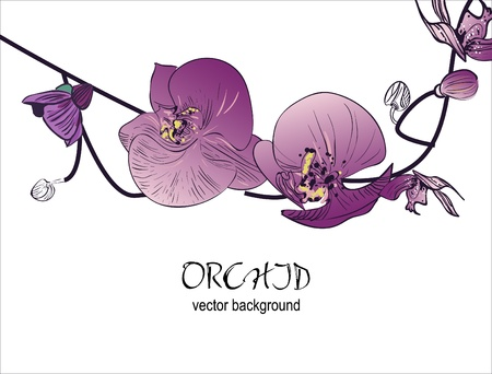 botanical branch: Orchid