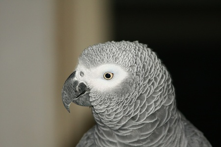 Photo with big gray parrot photo