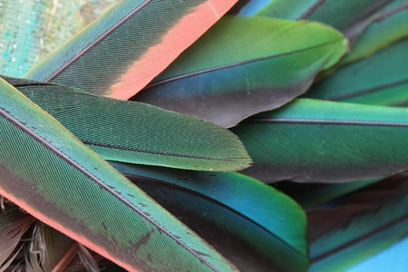 Photo with green parrot feathers photo
