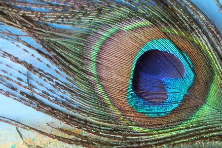 multicolored eye macro: Photo with bright peacock feathers