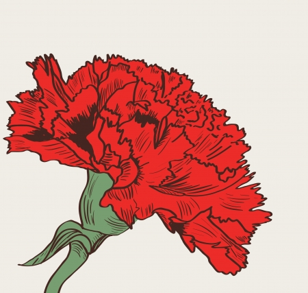 Vector illustration wit red drawing carnation