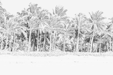 shore line: Photo with drawing beach and palm trees Stock Photo
