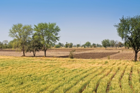 Photo with bright indian landscape with field and trees photo