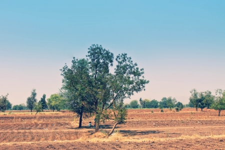 Photo with bright indian landscape with field and trees Stock Photo - 14724145