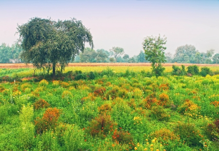 agriculture india: Photo with bright indian landscape with field and trees Stock Photo