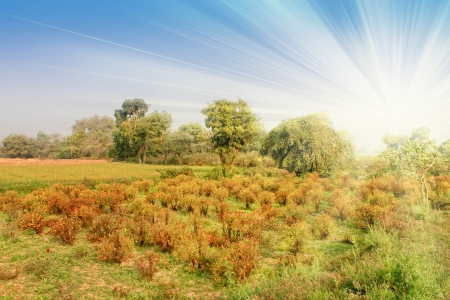 Photo with bright indian landscape with field and trees Stock Photo - 14724033