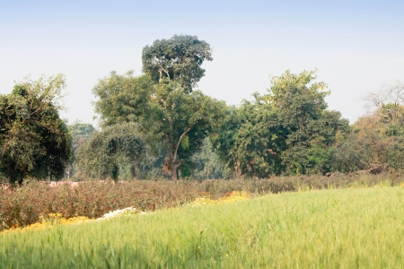 Photo with bright rural landscape photo