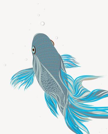 koi pond: Bright vector illustration with koi fish Illustration