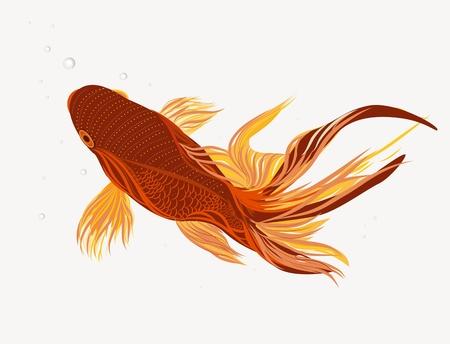 pez abstracto: Ilustraci�n vectorial brillante con peces koi