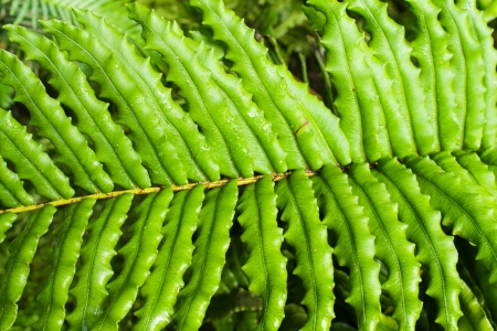 Close up photo with green fern leafs photo
