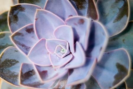 agave: Close up foto de verde cactus hojas Foto de archivo