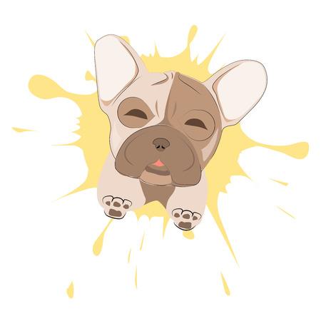 Französisch Bulldog Porträt auf einem Hintergrund von Blots. Kopf der Hund Vektor-Illustration. Hübscher Welpen-Cartoon-Charakter. Standard-Bild - 81364919