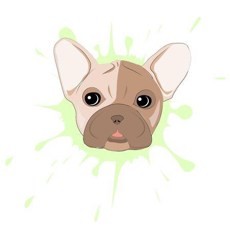 Französisch Bulldog Porträt auf einem Hintergrund von Blots. Kopf der Hund Vektor-Illustration. Hübscher Welpen-Cartoon-Charakter. Standard-Bild - 81364920
