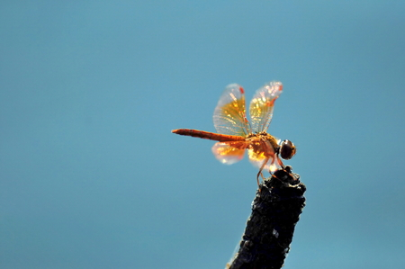 damselfly: Dragonfly on the wood