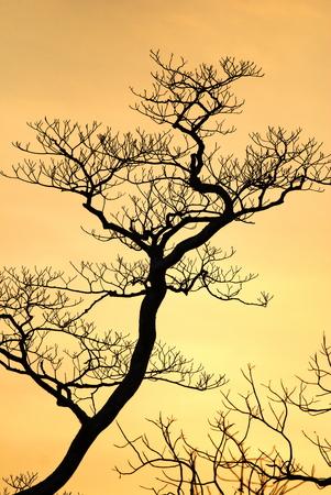 beech tree: amazing beech tree