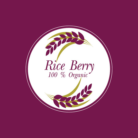 paddy field: Rice berry Vector illustration.
