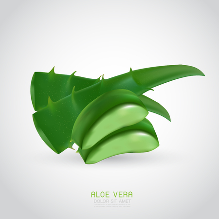 aloe vera with fresh drops of water Illustration
