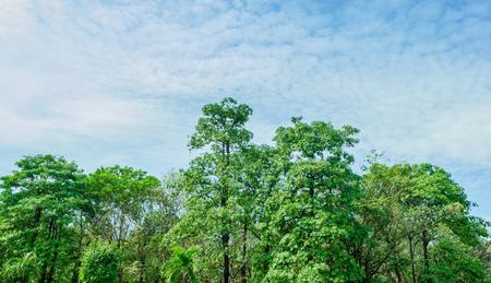 árboles de los bosques tropicales están en el jardín.