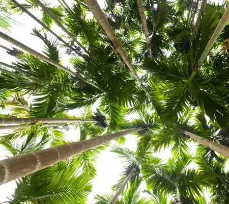 palm trees Stock Photo - 7760366