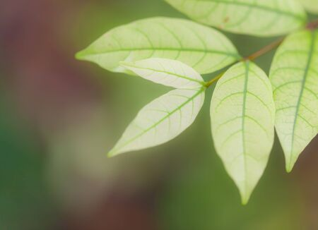 Background Nature green leaves Stock Photo - 7969490