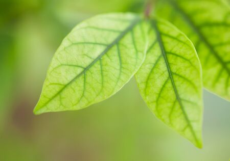 Background Nature green leaves Stock Photo - 7969493